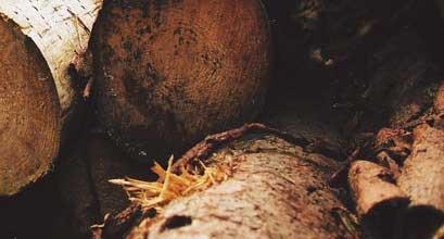 abitare-legno-radici